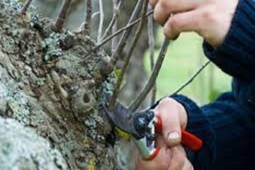 Tree Pruning & Removal
